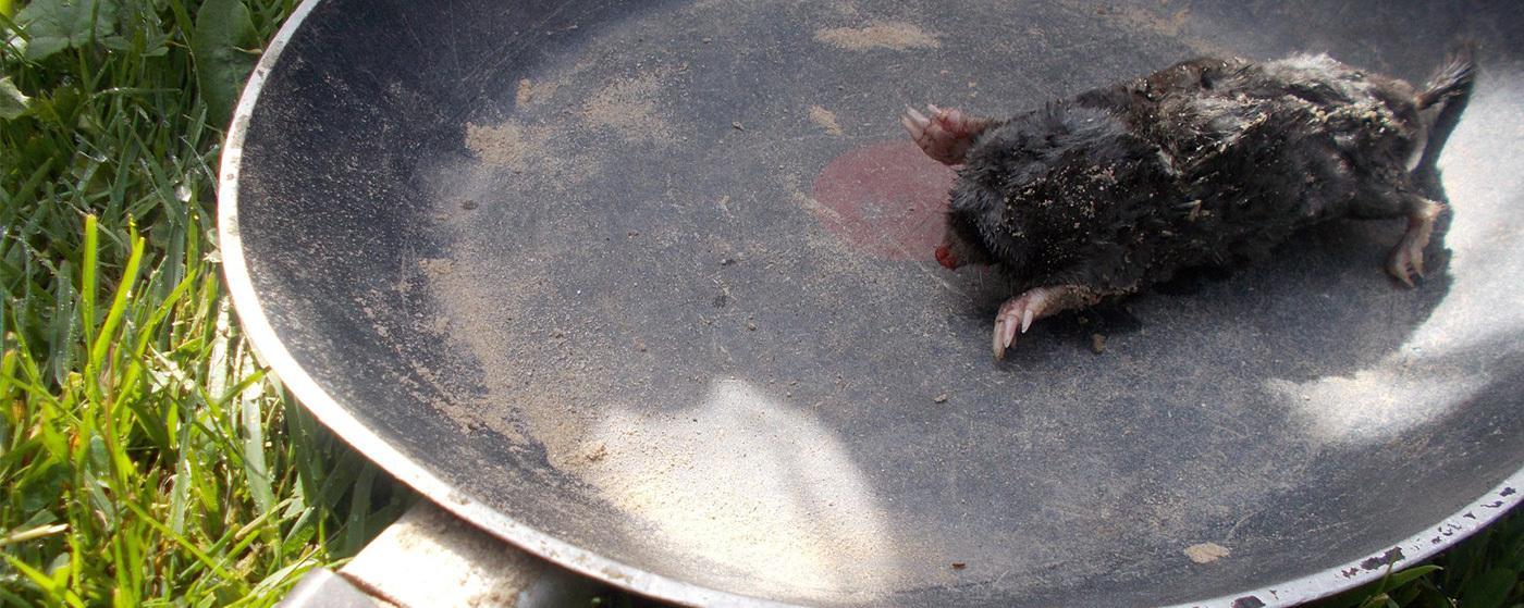 Wat de dode mol ons kan leren…